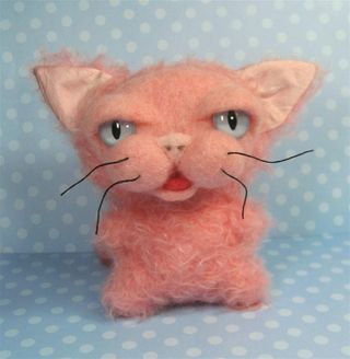 Pinkus the cat b (Large)